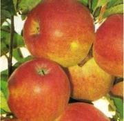 Сажецы плодовых почтой