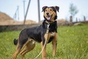 Суперский пёс Рекс ищет любящую семью!!!