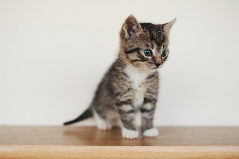 Объявление отдам кота гродно дать бесплатное объявление для чатов