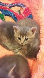 Милые котята ищут свою любящую семью!!!
