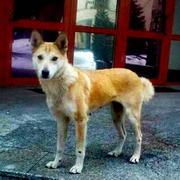 Собака-мама со щеночками срочно ищут дом или хотя бы передержку!!!