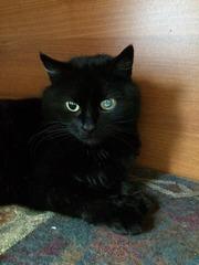 Кошка-красавица ищет любящую семью!!!