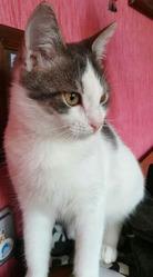 Котенок Няшик ищет любящих родителей!!!
