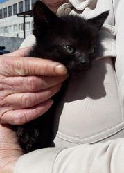 Милые котята в поисках заботливых родителей!