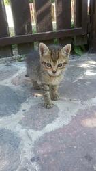 Хорошенький котенок в поиске дома!