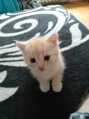 Рыженький котенок в поиске хозяев!