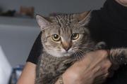 Кошка Пелагея ищет дом и любящую семью!