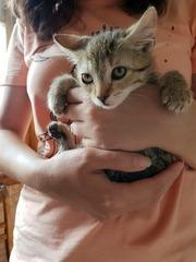 Сладкие котятки ищут дом!!!
