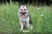 Жизнерадостная собака Юта ищет заботливых хозяев!