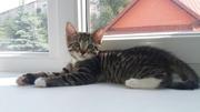 Котёныш ищет дом!