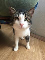 Котик Тихон ищет любящую семью!