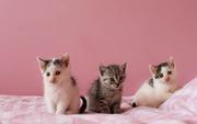 Крошечные малыши ищут мам и пап!!!