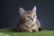 Славная кошечка хочет обрести семью!!!