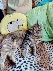 Обаятельная кошка ждет своего заботливого и любящего хозяина!!!