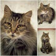 Кошечка-милашка Майя ищет дом и заботливого хозяина!!!!