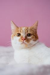 Милашка-кошечка ждет любящих хозяев!!!