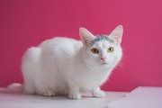Невероятная белая кошка ищет хозяев.