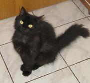 Молодая кошечка Соня ищет дом!!!