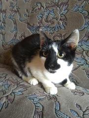 Ищут постоянные семьи два потрясающих,  жизнерадостных котенка.