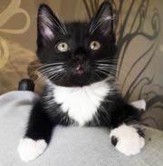 Особенный и неповторимый котенок Мурлыка ищет дом!