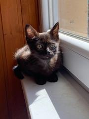 Черненький котенок в поисках любящей семьи!