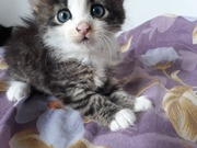 Чудесные котятки ищут дом!!!