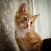 Маленький Персик в добрые руки!