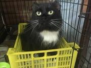 Кошечка Муся ищет любящую семью!!!