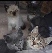 Котята в добрые и ответственные руки!