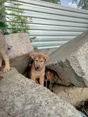 Хорошенькие щеночки ищут заботливых хозяев!!!!