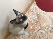 Невероятная кошечка Фрося - красавица ищет ДОМ!