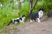 Очаровательные котята ищут дом!!!