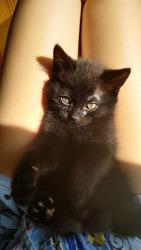 Чудо-котенок очень хочет быть любимым!