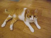 Прекрасный котик ищет любящих хозяев!!!