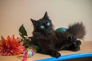 Кошечка Офелия ищет заботливые ручки!!!