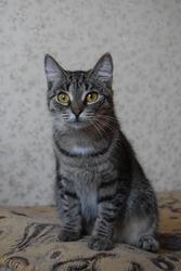 Прекрасная кошка Хаврошечка ищет дом!!!